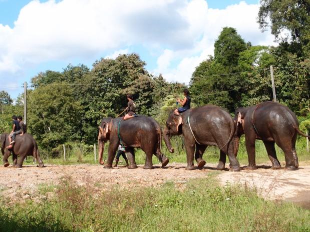 Elephants' Best Friend – theMahout