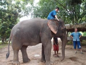 Elephant Park in Chiangmai